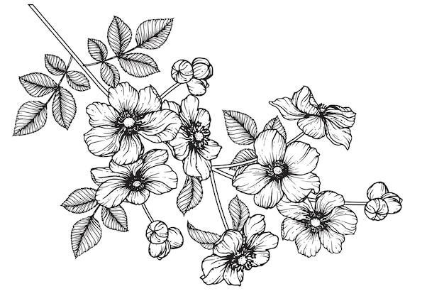 Collection Set Of Anemone Flower And Leaves Drawing Illustration