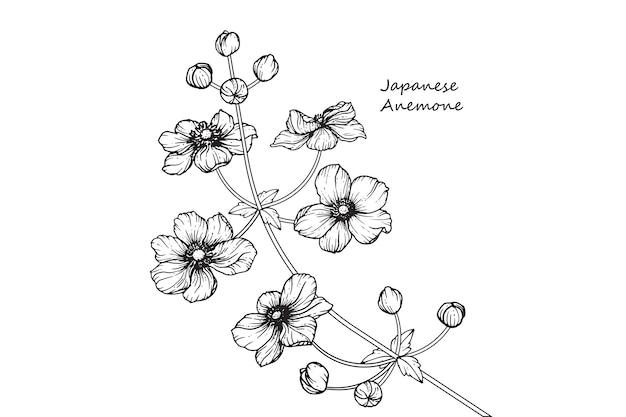 Japanese anemone flower drawings