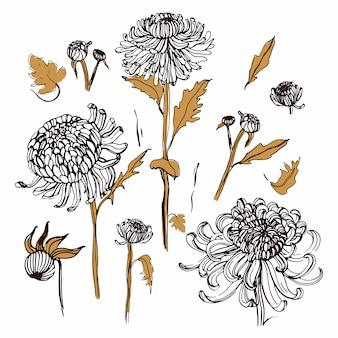 Japanese chrysanthemum set