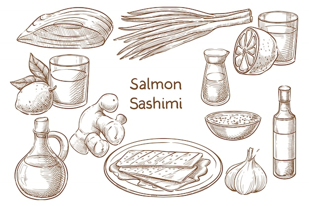 Japanese  cuisine. salvon sashimi. ingredients. sketch