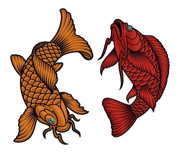 白で隔離される日本の鯉