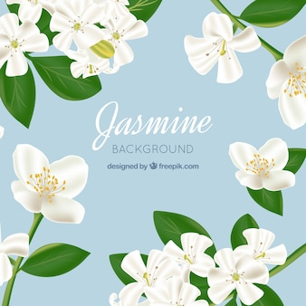 Jasmine background in realistic style