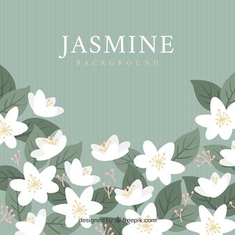 Jasmine background with modern style