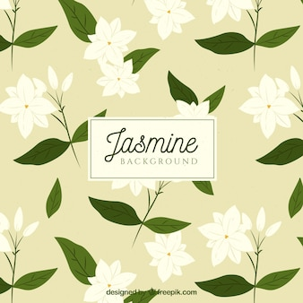 Jasmine background with white flowers