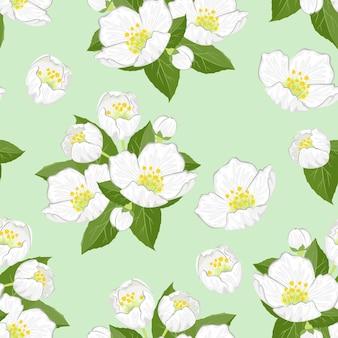 Jasmine flowers seamless pattern.