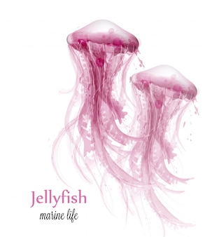Jellyfish watercolor background