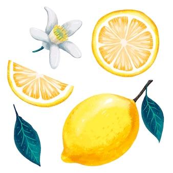 레몬, 레몬 잎과 레몬 꽃, 레몬 슬라이스 및 컷, 현대적인 디자인의 육즙이 그림
