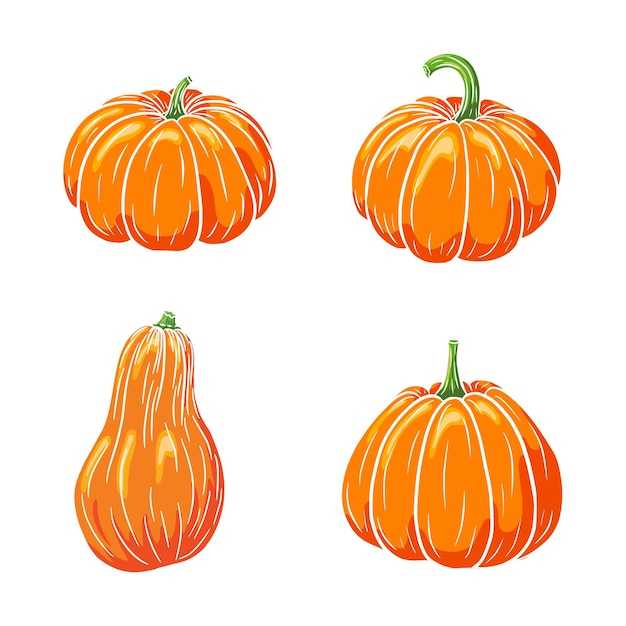 Juicy pumpkins collection. ripe pumpkin illustrations set for stickers, prints, invitation, menu and greeting cards design and decoration. premium vector