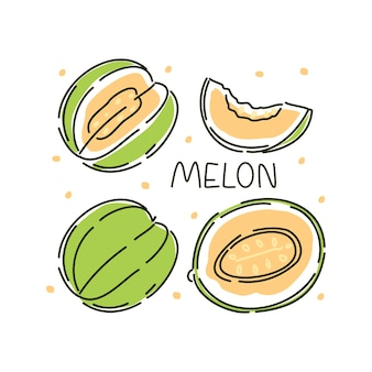 Juicy whole melon and slices set on a white background. vector abstract illustration.