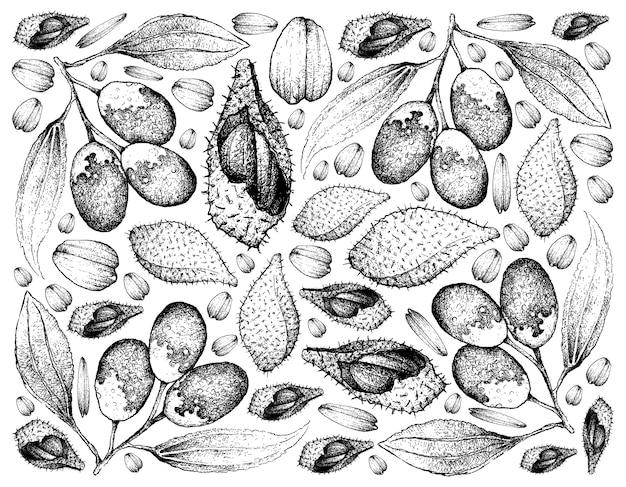 Рисованный фон лук ракам и jujube фрукты