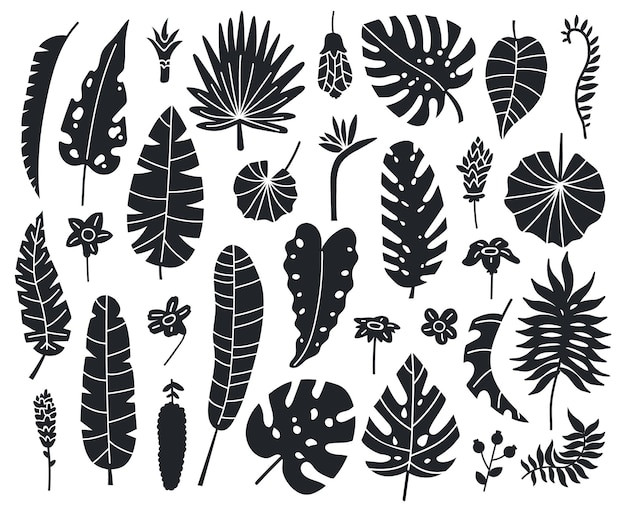 Jungle leaves silhouettes. exotic palm, banana and monstera monochrome leaves vector set
