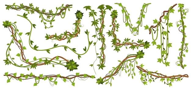 Jungle liana plants. tropical vine branches with leaves, climbing wild liana species isolated set