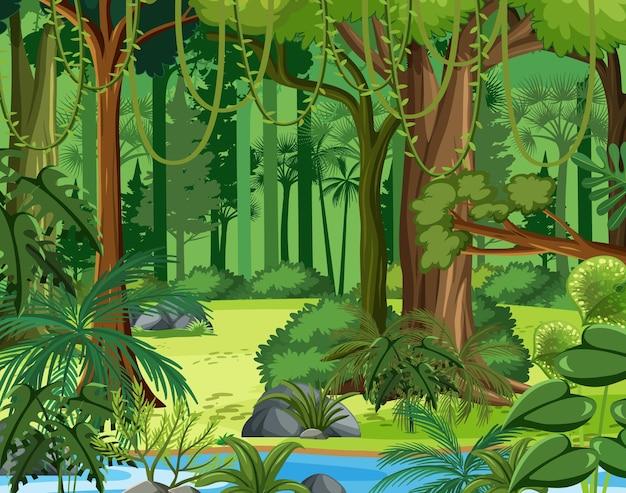 리아나와 많은 나무가있는 정글 장면