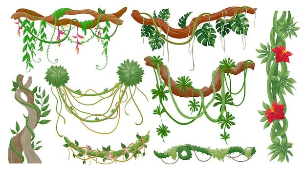 정글 덩굴. 매달린 리아나 로프, 녹색 이끼, 이국적인 식물 잎과 꽃이 있는 열대 나무 가지. 열대우림 식물, 포도 나무 벡터 세트입니다. 나무, 녹색 잎의 그림 분기와 정글 숲