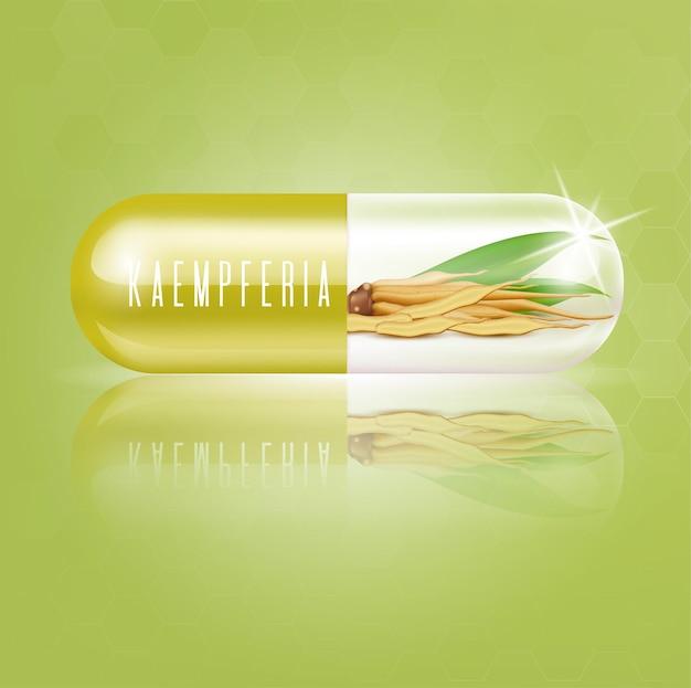 Kaempferia 신선한 캡슐 비타민 밝은 녹색 생강 뿌리 허브와 신선한 뿌리 줄기 프리미엄 벡터