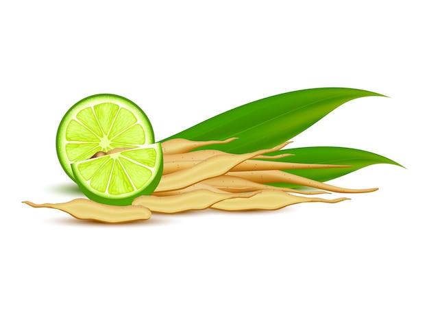 Kaempferia fresh lemon ginger root herbal with fresh rhizome