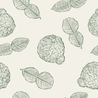 Kaffir lime, seamless pattern vector.  hand draw sketch vector.