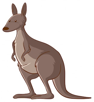 Kangaroo on whte background