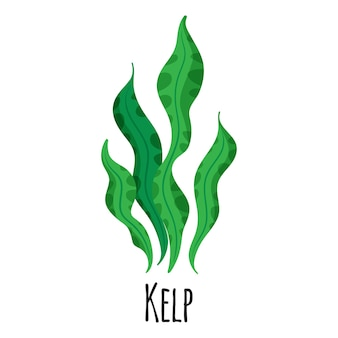 Kelp superfood seaweed for template farmer market design, label and packing. natural energy protein organic food.