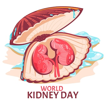 Kidney on the clam shells for world kidney day concept vector illustration