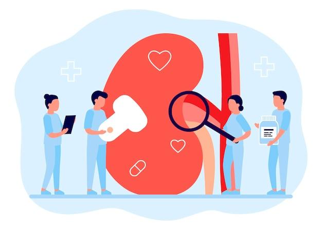 신장 건강 비뇨기과 및 신장 의학 연구를 수행하는 의사는 건강을 확인합니다