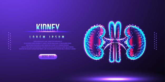 Kidney, human anatomy, low poly wireframe