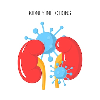 Kidney infection concept isolated on white