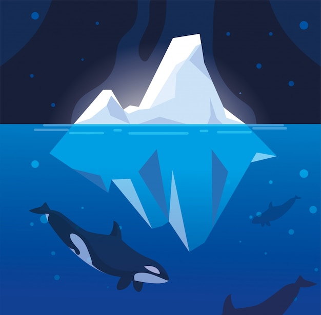 Killer whale whit iceberg floating in in the sea