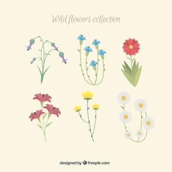 Вид рисованной цветы