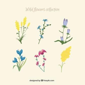 Kind of wild flowers