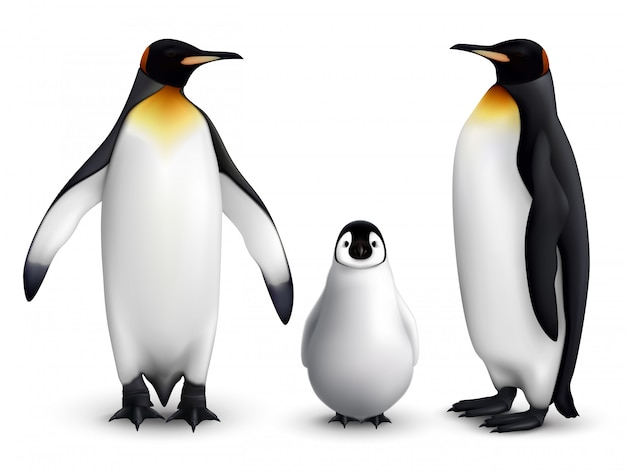 King penguin family with chick realistic closeup image with adult birds front and side view