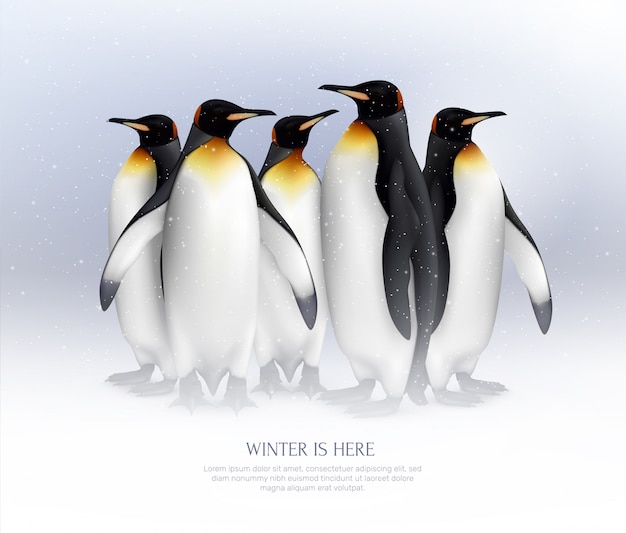 素晴らしい冬の休暇のアイデアのために現実的な雪の環境構成でキングペンギンのコロニー