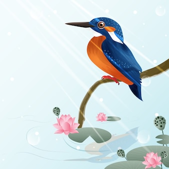 Kingfisher bird and lotus illustration