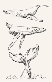 クジラのスケッチのキット