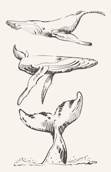 Kit of whale sketches
