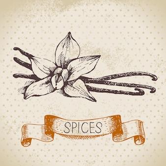 Кухонные травы и специи. старинный фон с рисованной эскиз ванили