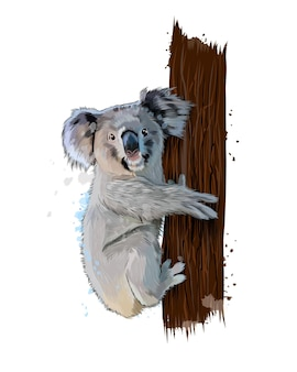 水彩画、カラードローイング、リアルなスプラッシュからコアラ。