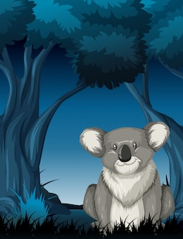Koala in night scene