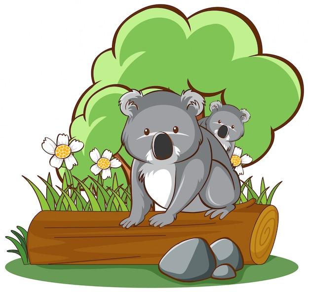 白い背景の上のログ上のコアラ