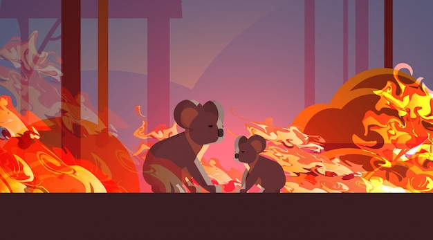 Koalas escaping from fires in australia animals dying in wildfire bushfire natural disaster concept intense orange flames horizontal