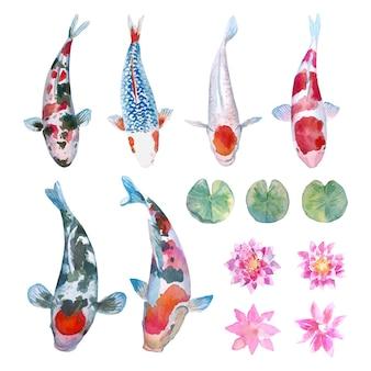 잉어 잉어 물고기, 연꽃과 연꽃 잎 수채화 컬렉션.