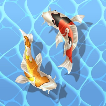 Koi carps realistic fish swimming in water