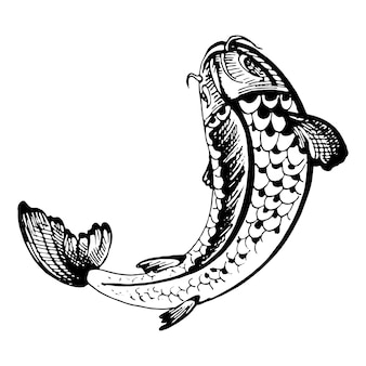 Koi carps vintage vector hatching black monochrome illustration isolated on white gn ink