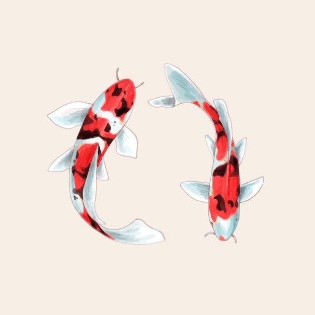 Outstanding 3D Origami Koi Fish Diagram Graphics Code 3D Origami Koi Fish Wiring 101 Akebretraxxcnl