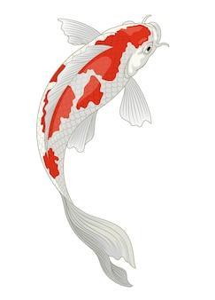 Koi fish japan in red and white kohaku pattern