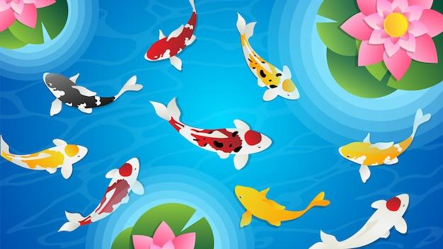 蓮の鯉の池