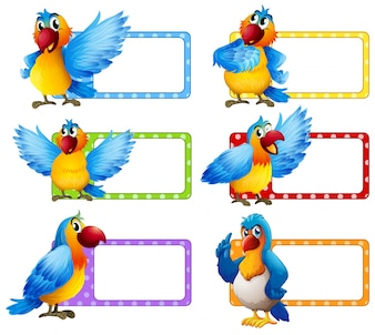 Label design with colorful macaw illustration