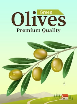 Label of green olives with realistic olive branch. illustration
