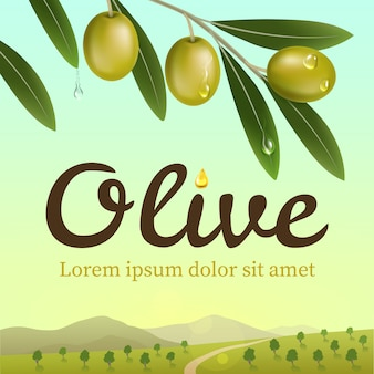 Label of green olives with realistic olive branch on olive farm background. illustration