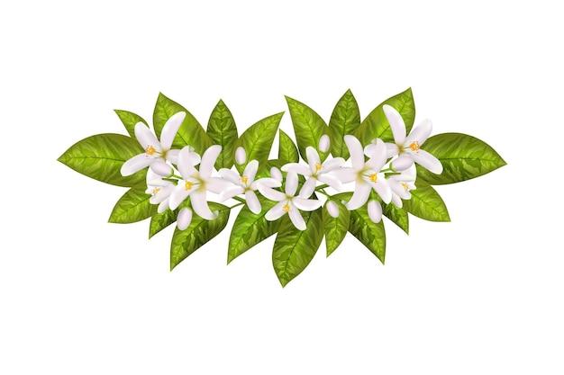 화장품 스킨 케어 제품 디자인의 레이블입니다. 벡터 그림입니다. 현실적인 오렌지 꽃 지점, 잎, 네롤리 꽃.